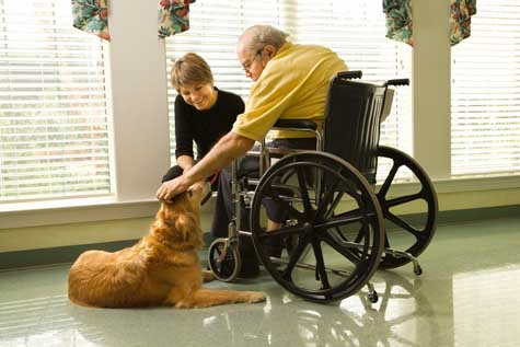 Animal Assisted Therapy Practice