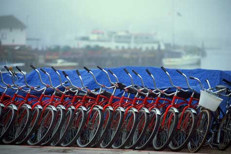 Bicycle Rental Business