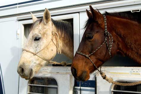 Horse Transportation Business
