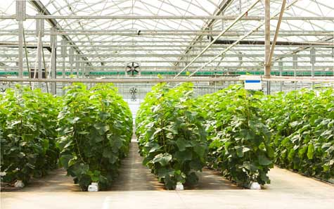 Starting a Hydroponics Business - Becoming an Entrepreneur ... on small garden greenhouse, small greenhouse plans, small greenhouse frame, small propagation greenhouse, small greenhouse supplies, small solar greenhouse, small greenhouse foundation, small winter greenhouse, small metal greenhouse, small cannabis greenhouse, small indoor greenhouse, small farm greenhouse, small hoop greenhouse, small container greenhouse, small hobby greenhouse, small portable greenhouses, small greenhouse heating, small mushroom greenhouse, small plant greenhouse, small pvc greenhouse,