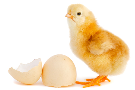 How to Start a Poultry Hatching Business - Open a Business